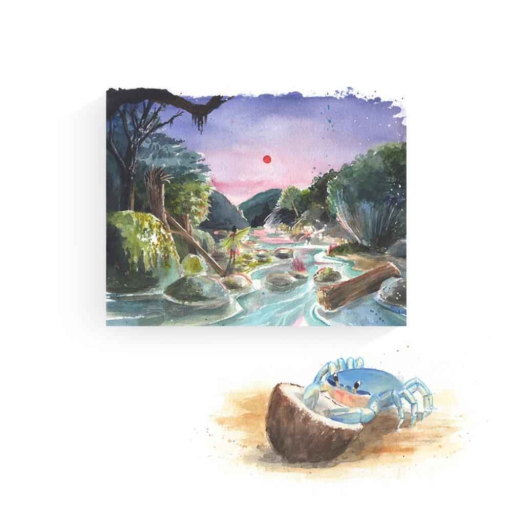 illustrateur aquarelle crabe bleu végétation